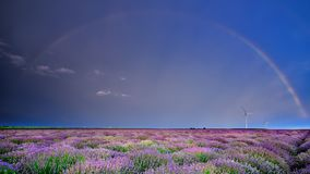 Lavender flowers in the spring with rainbow and eolian mills. Lavender flowers in the spring with green blurred background , lavender fields and rainbow stock image