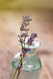 Lavender flowers Toning Royalty Free Stock Images