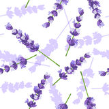 Lavender flowers vector seamless pattern Stock Photo