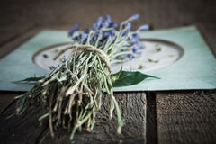 Lavender flowers on vintage background Royalty Free Stock Images