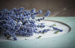 Lavender flowers on vintage background Royalty Free Stock Image