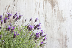 Lavender flowers on vintage wooden boards background Stock Photo