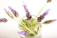 Lavender flowers in water Royalty Free Stock Images