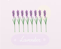 Lavender flowers watercolor Stock Photo
