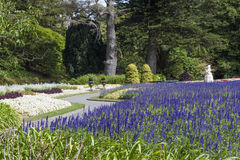 Lavender flowers at Wellington Botanic Garden, New Zealand Stock Image
