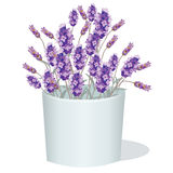Lavender flowers in a white pot. Aromatic gift decor in watercolor paint style Vector. Gentle blossom floral bouquet. Vintage Label with lavender beautiful Royalty Free Stock Image