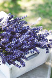 Lavender flowers in white tray Royalty Free Stock Image