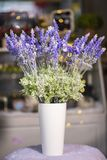 Lavender flowers in white vase used for home decoration. On blur background royalty free stock photos
