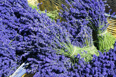 Lavender Flowers in a Wicker Basket Stock Photography