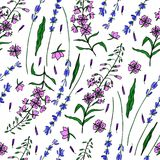 Lavender flowers, Willow herb, Chamerion angustifolium, fireweed, rosebay hand drawn colorful illustration, seamless. Vector floral pattern, graphic texture Royalty Free Stock Image