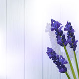 Lavender flowers on wood Royalty Free Stock Images