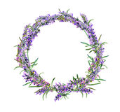 Lavender flowers wreath. Watercolor Royalty Free Stock Photography