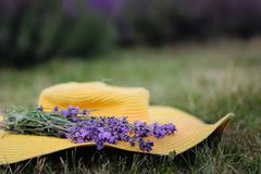 Lavender flowers on a yellow hat in summer in Hungary stock photo