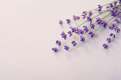 Lavender flowers for your post card. Beautiful spring lavender flower background. Lavender color. Bunch of lavender. Image of beautiful lavender flowers border stock images