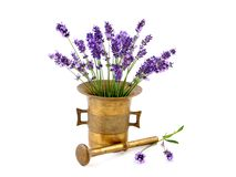 Lavender fowers in mortar Royalty Free Stock Photo