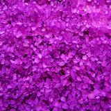 Lavender  fragrance  bath salts crystals Stock Photos