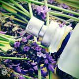 Lavender fragrance Royalty Free Stock Photography