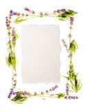 Lavender frame isolated on white Royalty Free Stock Photography