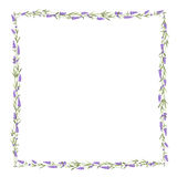 The Lavender frame line. Stock Images