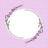 Lavender frame 2 Royalty Free Stock Image