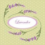 Lavender frame 5 Stock Images