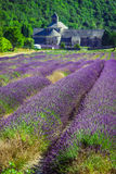 Lavender in front of the abbaye de Senanque in Provence Royalty Free Stock Photos