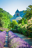 Lavender in front of the abbaye de Senanque in Provence. Europe Stock Photography