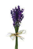 Lavender in front of white background Royalty Free Stock Images