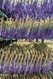 Lavender in Furano, Hokkaido, Japan Stock Photos