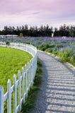 Lavender garden Royalty Free Stock Photos