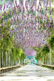 Lavender Garden Stock Images