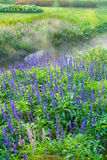 Lavender garden. Background style image Stock Images