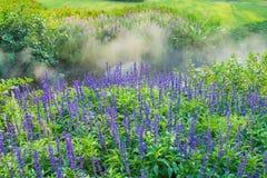 Lavender garden. Background style image Royalty Free Stock Photo