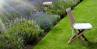 Lavender garden in the morning Stock Photos