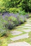 Lavender garden path Stock Photo