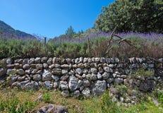 Lavender garden view Mallorca Stock Image