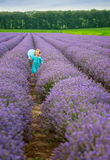 Lavender girl Stock Photography