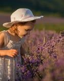 Lavender girl Stock Photo