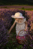 Lavender girl Stock Photo