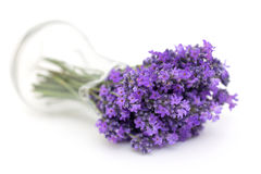 Lavender in a glass pitcher. On white Stock Image