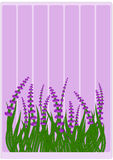 Lavender on grass Border Stock Photos