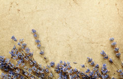 Lavender on grunge background Royalty Free Stock Photo