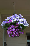 Lavender Hanging Basket Royalty Free Stock Photos