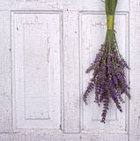 Lavender hanging from an old door Royalty Free Stock Photography