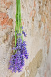 Lavender hanging on a stone wall Stock Images
