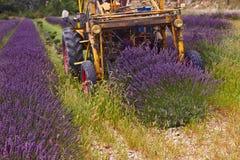 Lavender harvest, France Stock Images