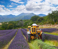 Lavender harvest, France Royalty Free Stock Photo