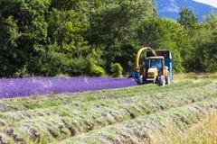 Lavender harvest. In Rhone-Alpes, France Royalty Free Stock Images