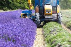 Lavender harvestin. Lavender harvest, Rhone-Alpes, France Royalty Free Stock Photography