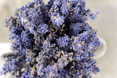 Lavender. The health benefits of lavender essential oil include its ability to eliminate nervous tension, relieve pain, disinfect the scalp and skin and treat stock image